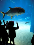 Excited School Children Gazing at Fish at Osaka Aquarium