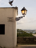 Pigeons Above Street Lamp in Parque De Las Palomas in Old San Juan