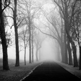 The Foggy Lane