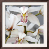 Orchid Closeup I