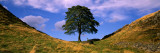 Lone Tree  Hadrian&#39;s Wall (Sycamore Gap) Northumberland  England