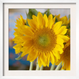 Sunny Sunflower I
