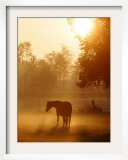 Horse Stands in a Meadow in Early Morning Fog in Langenhagen  Northern Germany