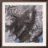 The Mcmurdo Dry Valleys West of Mcmurdo Sound  Antarctica