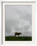 Horse Stands on a Rainy Meadow  St Peter  Germany