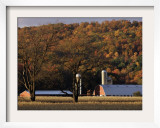 Fall Colors and a Field of Dried Soybeans in Pleasant Gap  Pennsylvania  October 20  2006