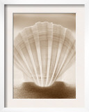 Luminescent Irish Deep Seashell