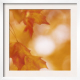 Autumn Leaves in Soft Sunshine I