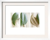 Leaves and Muslin Triptych