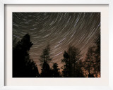Star Trails over the Trees in Aberdeen  Scotland