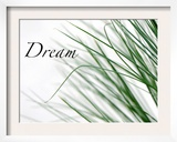 Dream: Reeds