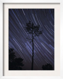 A View of Star Trails Taken in the Middle of a Pine Forest in Fonte Da Telha  Portugal