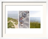 Shells and Dunes Triptych