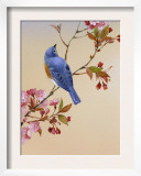 Blue Bird on Cherry Blossom Branch