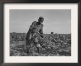 Thirteen-Year Old African American Sharecropper Boy Plowing in July 1937