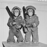 Two Chimpanzees Dressed As Policemen  Standing Holding Guns