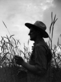 Silhouette of Farmer Wearing Straw Hat in Middle of Wheat Field