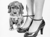 Legs of Woman in High Heel Shoes Tangled By Leash of Cocker Spaniel Puppy