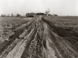 Dirt Road Leading Up To Old Farm House Surrounded