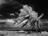 Infrared Image of Palm Trees Blowing in Wind