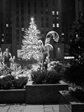 Christmas Tree in Front of Rockefeller Centre at Night  New York City