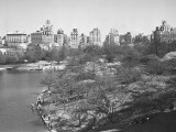 New York City  Central Park (B&W)