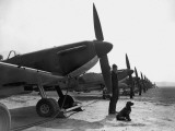Spitfires at Duxford
