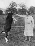Perfrorming Goat