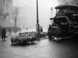 City Sheep