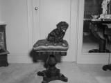Black Dog Sitting on Stool