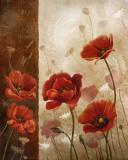 Wild Poppies I