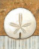 Vintage Shell IV Reproduction d'art par K. Bates