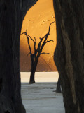 Dead Trees Silhouetted Against Sand Dune at Dead Vlei  Sossusvlei  Namibia  Africa