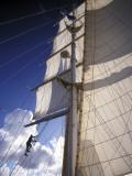 Crew Member Climbing Mast of the Star Clipper  Caribbean