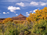 North Six Shooter Peak Framed With Yellow Fall Cottonwoods  Utah  USA