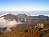 Haleakala Crater From Crater Rim and Silversword in Foreground Haleakala National Park  Maui  HI