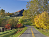 Rural Road Through Bluegrass in Autumn Near Lexington  Kentucky  USA