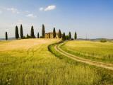 Tuscan Villa Nearing Harvest  Tuscany  Italy