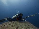 Diving With Spear Gun  Wolf Island  Galapagos Islands  Ecuador