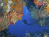 Diver Inspects Reef  Raja Ampat  Papua  Indonesia