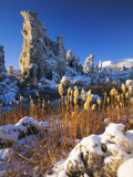 Fresh Snow on Tufa Formations & Cattails at Sunrise  Mono Lake  Inyo National Forest  CA