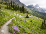 Highline Trail To Granite Park Chalet  Glacier National Park  Montana  USA