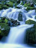 Periodic Spring During Period of High Flow  Salt River Range  Bridger-Teton National Forest  WY