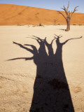 Dead Tree Casts Shadow on Dry Lakebed    Sossusvlei  Namibia  Africa