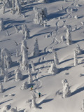 Skiing Through the Snowghosts at Whitefish Mountain Resort  Montana  USA