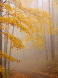 Fog and Autumn Foliage  Great Smoky Mountains National Park  North Carolina  USA