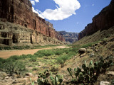 Looking Downriver From Nankoweap Canyon  Grand Canyon National Park  Arizona  USA