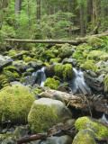 Mountain Stream in Old Growth Forest at Sol Duc  Olympic National Park  Washington  USA
