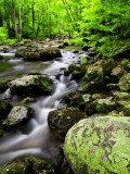 Creek Flows Through Forest  Shenandoah National Park  Virginia  USA