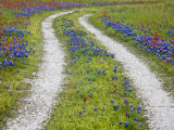 Tracks Leading Through a Wildflower Field  Texas  USA
